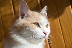 Sight of a cat Royalty Free Stock Image