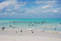 A beach in a Cuban island. Sight from a Cuban beach Stock Photos