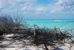 A beach in a Cuban island. Sight from a Cuban beach through branches Stock Image
