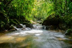 Sight of a stream at tropical forest stock photography