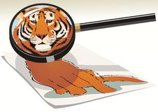 Sight under a magnifier. Cat is a small tiger. Vector illustration Stock Photo