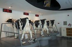 Sighten för fabrik för Mengniu mejeriindustrifas 6 turnerar royaltyfri fotografi