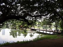 Sights and scenes inside the Ninoy Aquino Parks and Wildlife Center. Royalty Free Stock Photo