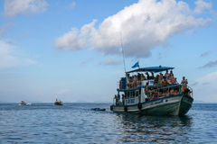 The sightseeing boat in phi phi island Stock Image