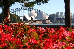 Iconic tourist attractions of Sydney Opera House and Harbor Bridge behind red leaf foliage in Royal Botanic Garden, CBD waterfront stock image