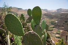 Sightseeing-Tour in Gran Canaria, Berge Stockbilder