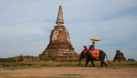 Sightseeing. Tourist on elephant sightseeing in Ayutthaya Historical Park, Ayutthaya, Thailand Stock Photography