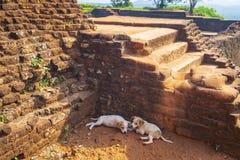 Sigiriya, Sri Lanka foto de stock royalty free