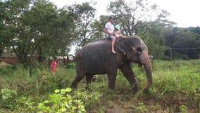 SIGIRIYA, SRI LANKA - FEBRUAR 2014: Bemannen Sie und ein Kind, das einen Elefanten in Sigiriya reitet Diese alten Elefanten sind  stock video footage