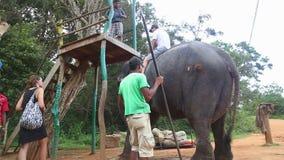 SIGIRIYA, SRI LANKA - FEBRUAR 2014: Bemannen Sie und ein Kind ungefähr, um einen Elefanten in Sigiriya zu reiten Diese alten Elef stock video