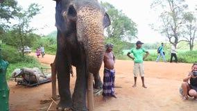 SIGIRIYA, SRI LANKA - FEBRUAR 2014: Die Ansicht des Fütterungselefanten des kleinen Mädchens mit Bananen in Sigiriya Diese alten  stock video