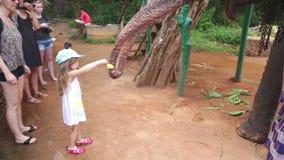SIGIRIYA, SRI LANKA - FEBRUAR 2014: Kleines Mädchen, das einen Elefanten in Sigiriya einzieht Diese alten Elefanten sind von der  stock video