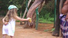 SIGIRIYA, SRI LANKA - FEBRUAR 2014: Kleines Mädchen, das einen Elefanten in Sigiriya einzieht Diese alten Elefanten sind von der  stock video footage
