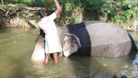 SIGIRIYA, SRI LANKA - FEBRUARY 2014: View of an elephant with his mahout, laying in a stream. It�s common practice to refresh el. Ephants after a day�s work stock footage