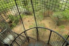 Sigiriya Sri Lanka - lejonet vaggar, vaggar fästningen Royaltyfri Bild