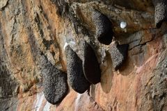 Sigiriya wasp nest, Sri Lanka Royalty Free Stock Photography
