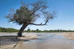River Ruaha Royalty Free Stock Photos
