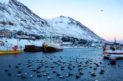 Siglufjordur-Hafen mit Fischerbooten an der Dämmerung Stockbilder