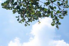 Μπλε ουρανός και πράσινα φύλλα στοκ εικόνες