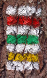 Sign. Macro photo of colored tourist mark on tree trunk Royalty Free Stock Photos