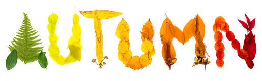 Sign 'Autumn' made of autumnal natural objects. Colorful leaves and mushrooms arranged into the 'Autumn' text. Autumnal mood royalty free stock photo