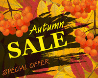 Sign autumn sale. Background with rowan, berries and leaves, fal. L. Vector illustration Royalty Free Stock Photography