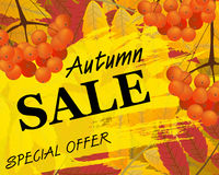 Sign autumn sale. Background with rowan, berries and leaves, fal. L. Vector illustration Royalty Free Stock Images