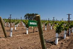 Sign for Barbera Grapes Royalty Free Stock Photography