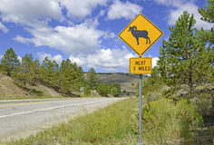 Sign for Bighorn sheep Rocky Mountains, Colorado Stock Images