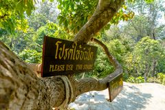 Sign board says `Please use the stairs` attached to big tree at a waterfall surrounded by green forest. royalty free stock photography