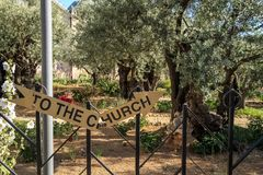 Sign broken down the middle reading & x22;TO THE CHURCH& x22; located in the Garden of Gethsemane. Mt of Olives, Jerusalem. Israel royalty free stock photos
