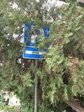 Sign in bush. Traffic, parking, city royalty free stock photo