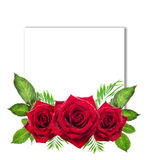 Sign card with roses and leaves on white background Stock Photos