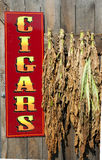 Sign for cigars near hanging tobacco leaves Royalty Free Stock Image