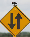 Sign confusing bird Royalty Free Stock Photography