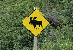 Sign elk crossing. Moose Crossing Road Sign from canada Stock Photos