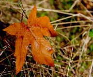 A sign of Fall Royalty Free Stock Images