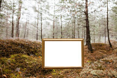 The sign in the forest Stock Image