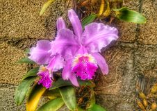 Sign of happiness. An orquidea flower cuba Royalty Free Stock Image
