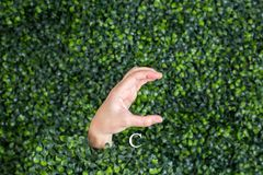 Sign Language Letter C. Made with hand against green plant background stock photo