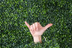 Sign Language Letter Y. Made with hand against green plant background royalty free stock photography