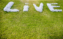 Sign on the lawn. Conceptual optimistic sign on the green grass lawn Royalty Free Stock Photography