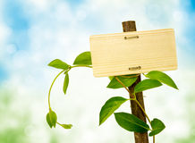 Sign for message on a wooden panel and green plant. Concept ecofriendly stock photo
