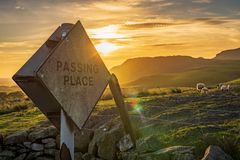 Sign: Passing place. With some sheep and the setting sun in the Yorkshire Dales landscape near Settle, North Yorkshire, England, UK royalty free stock images