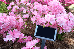 Sign in Pink Azaleas Royalty Free Stock Photo
