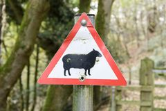 Sign Post with a sheep. Sign Post showing a warning of sheep on the road Stock Photography