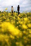 Sign in the rape field Royalty Free Stock Image