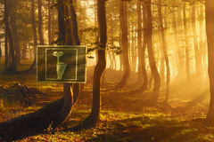 Sign with a request for silence in the forest Royalty Free Stock Photography