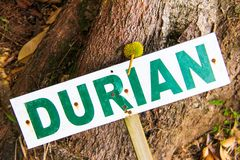 Sign saying durian Royalty Free Stock Photos