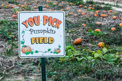 Sign for Self-Pick Pumpkin Patch Royalty Free Stock Photography